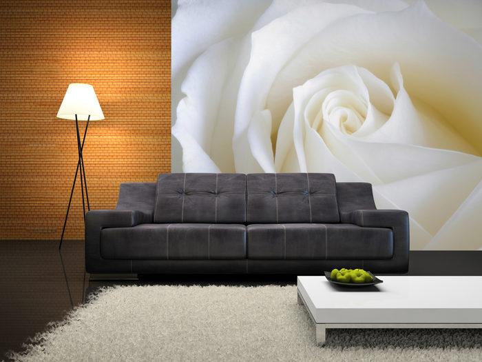 Fototapeta biała róża w salonie