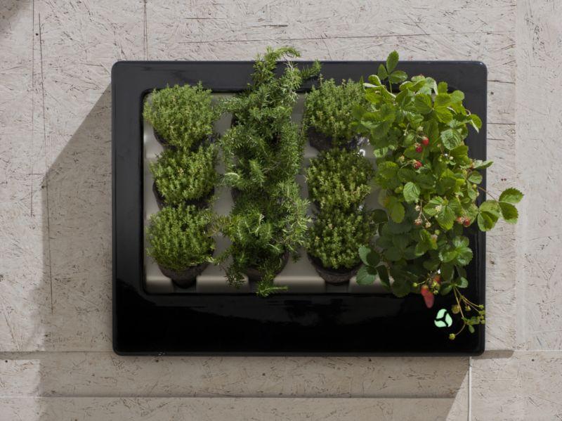 Rośliny, zioła w elektronicznej floramie z lampką sygnalizującą poziom wody