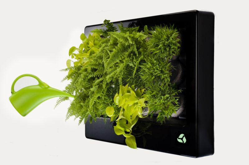 Rośliny we floramie podlewamy konewką