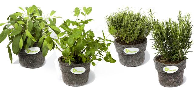 Rośliny do foloramy we wkładach - doniczkach z włókniny