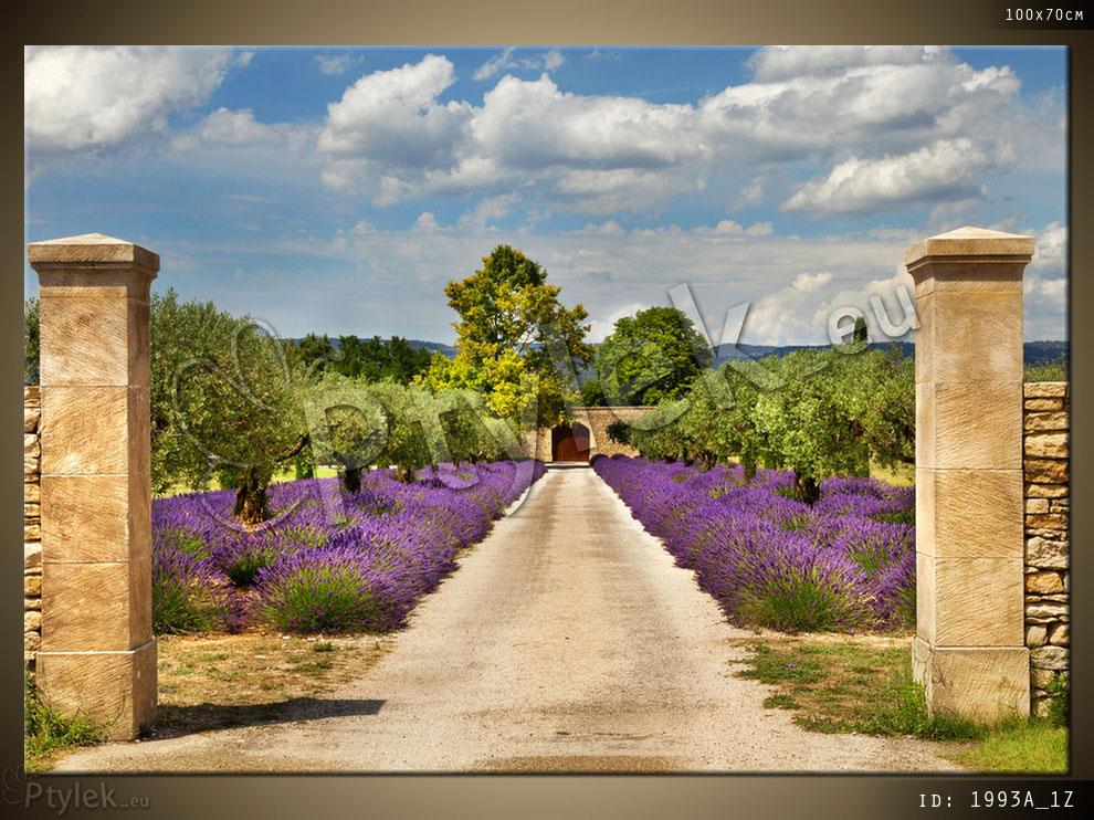 Obraz drukowany: Francja, Prowansja, brama, aleja, krajobraz i krzewy lawendy