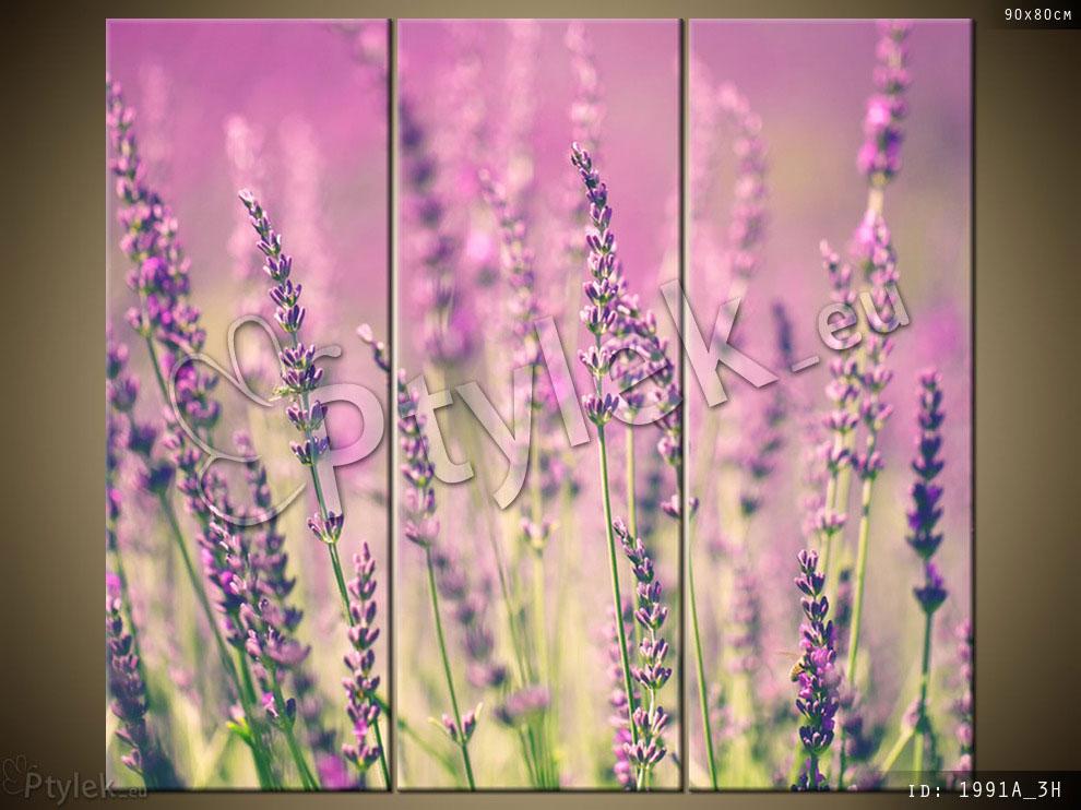 Tryptyk: kwiaty lawendy na polu