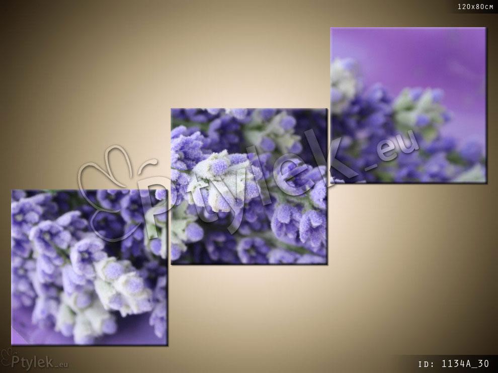 Tryptyk kwiatowy: fioletowe kwiatki lawnendy